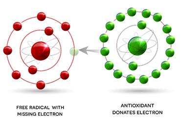 Antioxidants free radicals disease