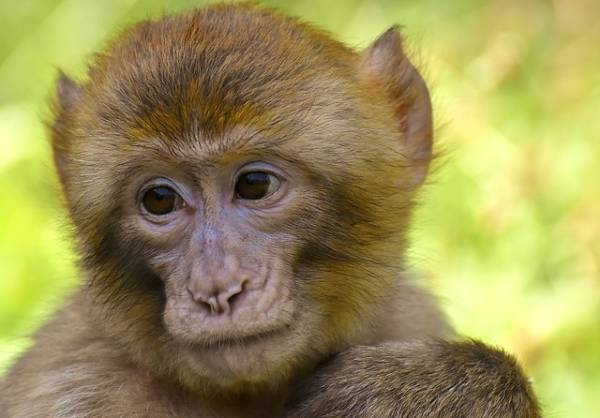 The world's current COVID-19 vaccine research is affecting animals, including mink, sharks, and monkeys.